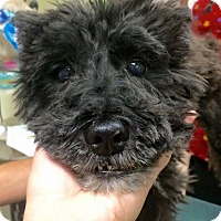 Adopt A Pet :: Nigel-BLIND - Oak Ridge, NJ