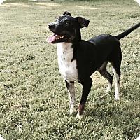 Adopt A Pet :: Lucy - Byhalia, MS