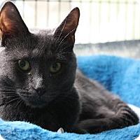 Adopt A Pet :: Rosie - Penndel, PA