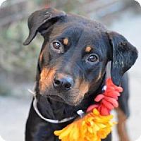 Adopt A Pet :: Magnolia - Rexford, NY