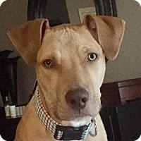 Adopt A Pet :: Simon - Blacklick, OH