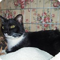 Adopt A Pet :: DUNCAN - Medford, WI