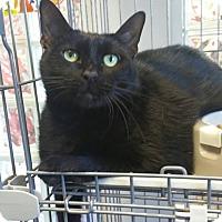 Adopt A Pet :: Midnight - Carencro, LA