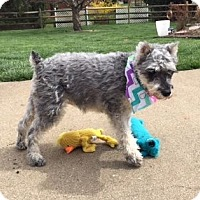 Adopt A Pet :: Lucy~~ADOPTION PENDING - Sharonville, OH