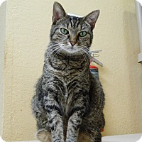 Adopt A Pet :: Lillie - Jupiter, FL