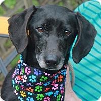 Adopt A Pet :: Jackson - Garfield Heights, OH