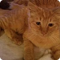Adopt A Pet :: MacGregor - Ennis, TX