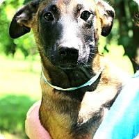 Adopt A Pet :: Sammy Kershaw~ meet me! - Glastonbury, CT