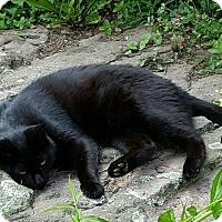 Adopt A Pet :: Jack - Roscoe, NY