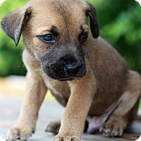 Adopt A Pet :: Dwayne - Waldorf, MD
