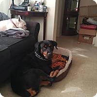 Adopt A Pet :: Kenzie - Cambridge, ON