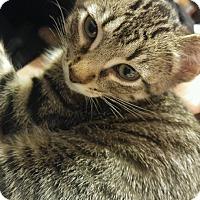 Adopt A Pet :: Casper - joliet, IL