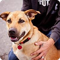 Adopt A Pet :: Sadie Dawn - Springfield, MO