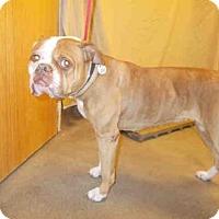 Adopt A Pet :: ROXY - Upper Marlboro, MD