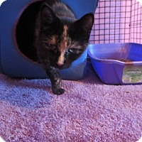 Adopt A Pet :: Goldie Hawn - Coos Bay, OR