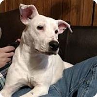 Adopt A Pet :: Maddie - Valley Stream, NY