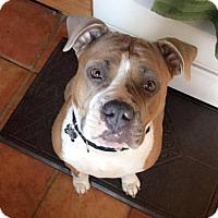 Adopt A Pet :: Nala - Lincoln, CA