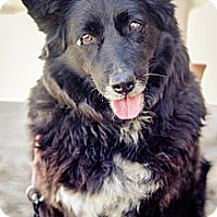 Adopt A Pet :: Heidy - Acton, CA