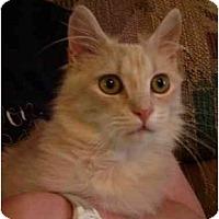 Adopt A Pet :: Wimbley (FIV+) - Wakinsville, GA