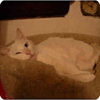 Adopt A Pet :: White Frankie - Cincinnati, OH