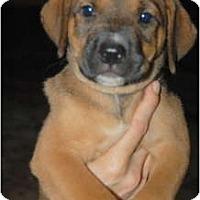 Adopt A Pet :: Rebecca - Douglasville, GA