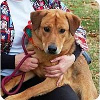 Adopt A Pet :: Sam-ADOPTED! - kennebunkport, ME