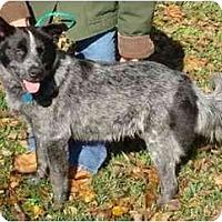 Adopt A Pet :: Cagney - Kingwood, TX