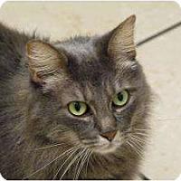 Adopt A Pet :: Bridget Jones - Chicago, IL