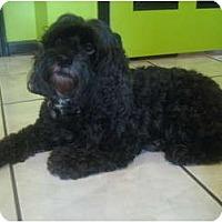 Adopt A Pet :: Molly - Orange Park, FL