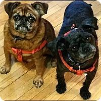 Adopt A Pet :: ATTICUS & MOLLY-ADOPTION PEND - Seymour, MO