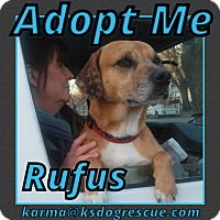 Adopt A Pet :: Rufus - Cheney, KS