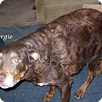 Adopt A Pet :: Georgie - Wilmington, DE
