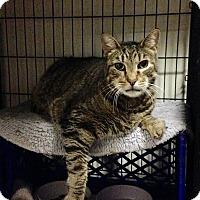 Adopt A Pet :: Rascal - East Brunswick, NJ