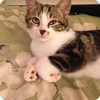 Adopt A Pet :: Miso - Gainesville, FL