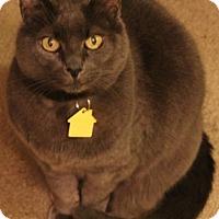 Adopt A Pet :: Aria - Fremont, CA