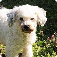Adopt A Pet :: Lizzie - Joplin, MO