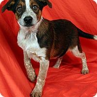 Adopt A Pet :: Victor Heeler - St. Louis, MO