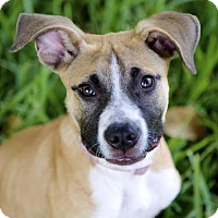 Adopt A Pet :: Mandy - Miami, FL