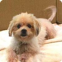 Adopt A Pet :: Squeaky - Atlanta, GA