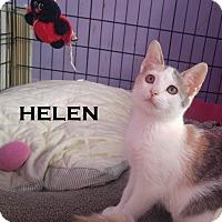 Adopt A Pet :: Helen - Speedway, IN