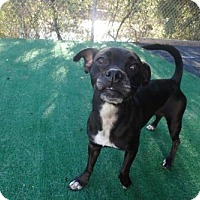 Adopt A Pet :: LARKIN (CB KW) - Tampa, FL