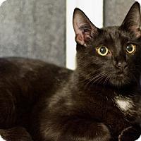 Adopt A Pet :: Lionel - Vancouver, BC