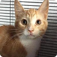 Adopt A Pet :: Graham - Breinigsville, PA