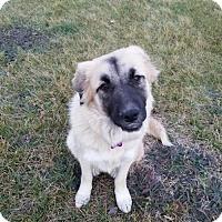 Adopt A Pet :: Heidi - Coldwater, MI
