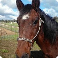 Adopt A Pet :: Merle - Newcastle, CA