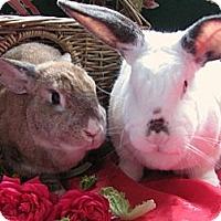 Adopt A Pet :: Babar - Huntsville, AL