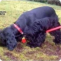 Adopt A Pet :: MaryLou - Tacoma, WA