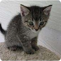 Adopt A Pet :: Freeway - Warren, MI