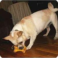 Adopt A Pet :: Kipper - Mooy, AL