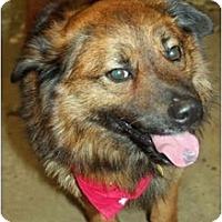 Adopt A Pet :: Bismark - Racine, WI